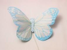 羽の蝶ちょ ホワイト&ブルー