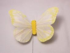 羽の蝶ちょ イエロー